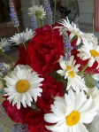Alaskan Shasta Daisies, Enlish Lavender, Dublin Bay red rose, Cascade Lace white roses